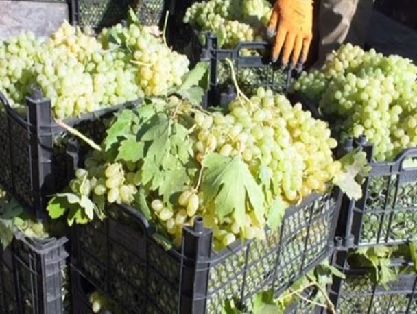 قحطی سـبد میوه در سیسخت؛ قطب تولید میوه کهگیلویه و بویراحمد