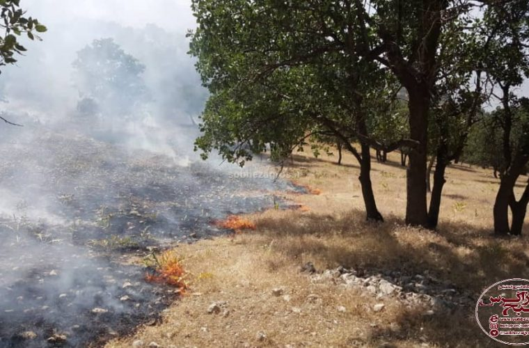 آتش به جان جنگل های دنا افتاد/اجازه ندهید خائیزی دیگر تکرار شود+تصاویر