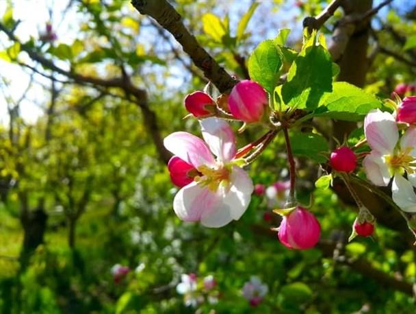 شکوه و زیبایی گل ها در بهار پایتخت طبیعت ایران