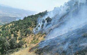 آتش سرخ بیشترین خسارت را به جنگل های بویراحمد وارد ساخت/شناسایی ۳ عامل آتش سوزی جنگل های بویراحمد