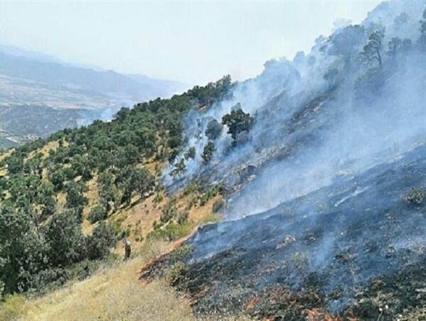قصه تلخ آتش در نارک و خامی+کلیپ